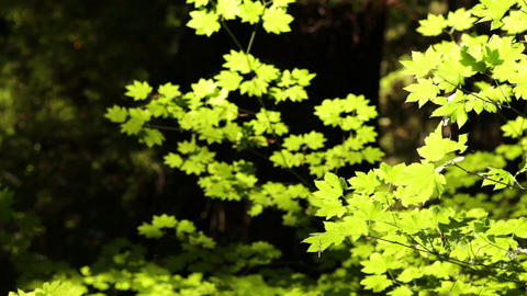 Bright bush leaves the sun of a forest Footage