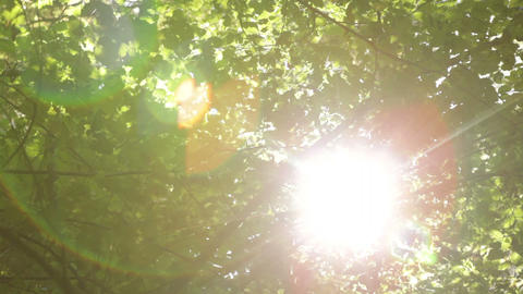 Sun shining behind leaves and branches Footage