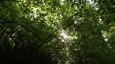 Sun breaking through leaves and branches Footage
