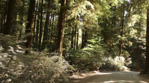 Driving through redwood forest Footage