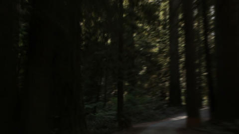 Road in redwood forest Footage