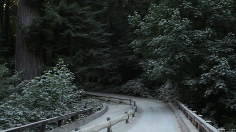 Driving across small bridge in redwood forest Footage