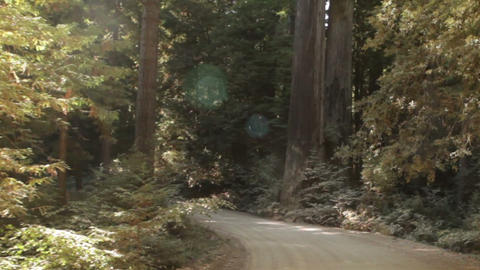 Driving down paved road in redwood forest Footage