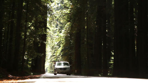 Tree Lined Road as Car Passes (Head On) Footage