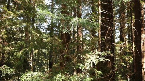 Tree Branches Blow in Gentle Breeze Footage