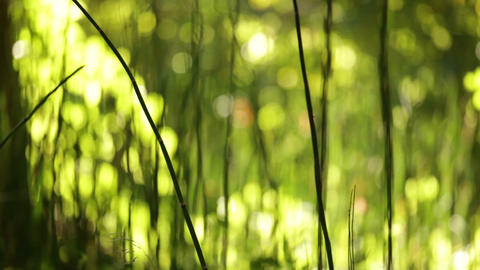Tall Grass Fading Out Footage