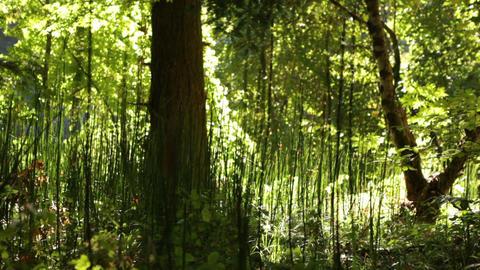 Tall Plants Under Tree Footage