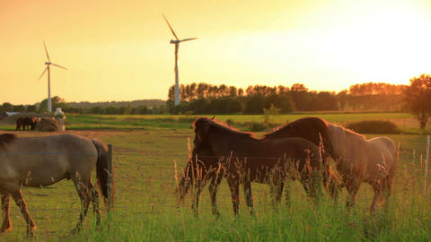 Static shot of horses along a fence and wind turbines on a farm in Copenhagen, D Footage