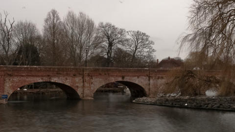 Panning time-lapse of swans on the river Avon in Stratford-upon-Avon, England Footage