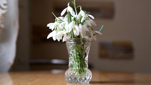 Snowdrops Stock Video Footage