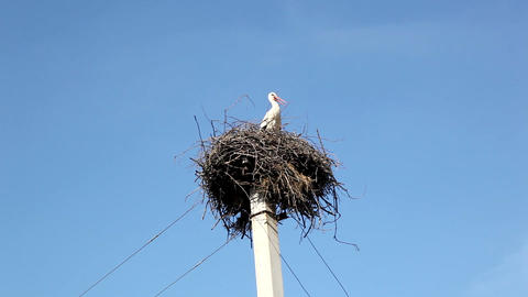 Stork Stock Video Footage