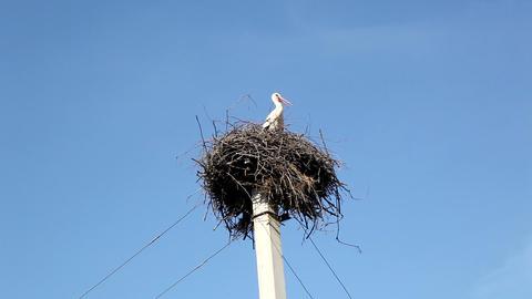 Stork Footage