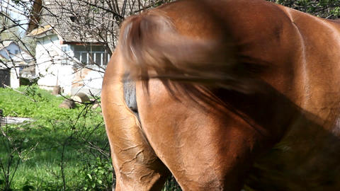 Horse Footage