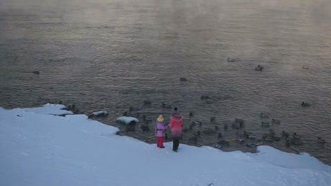 Children feeding gray ducks Stock Video Footage