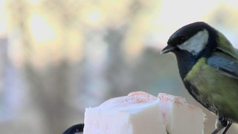 Fights of birdies 4 Stock Video Footage