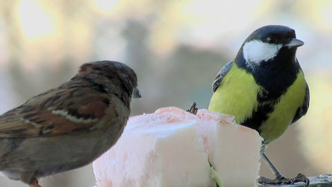 Fights of birdies 4 Stock Video Footage