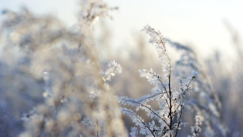 Frozen plants 2 Stock Video Footage