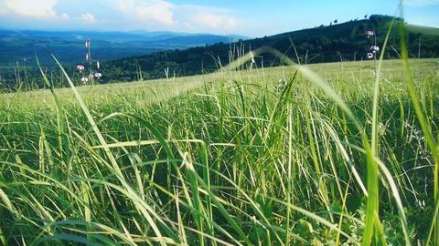Grassy hills 4 Footage