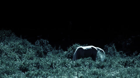 Horse at windy night 3 Footage