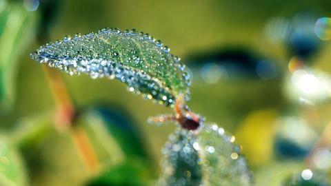 Morning dew 5 Footage