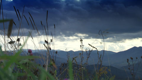 Mountain flowers 5 Stock Video Footage