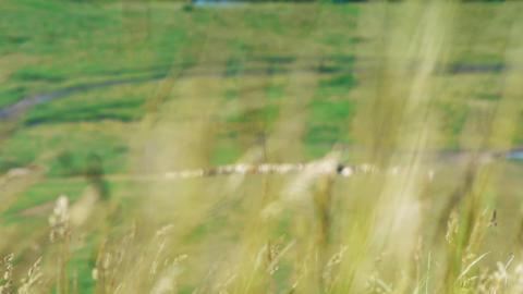 Rural 006 Footage
