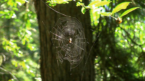 Spiders web Stock Video Footage