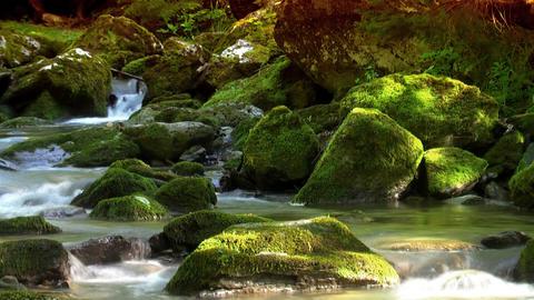 Woodland stream loop 2 Footage