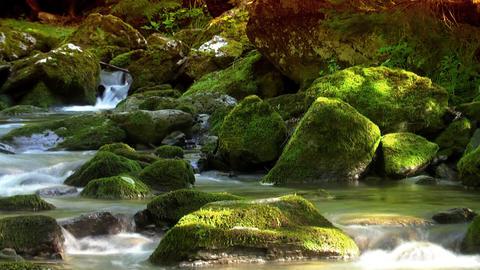 Woodland stream loop 2 Stock Video Footage