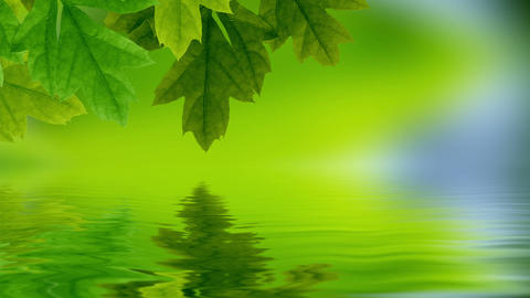 Leaf reflection Stock Video Footage
