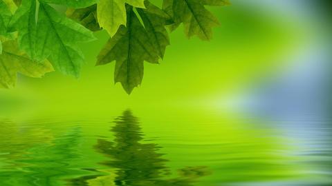 Leaf reflection Animation