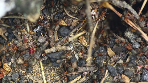 Ant nest. Macro Stock Video Footage