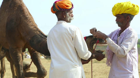 Pushkar Camel Fair stock footage
