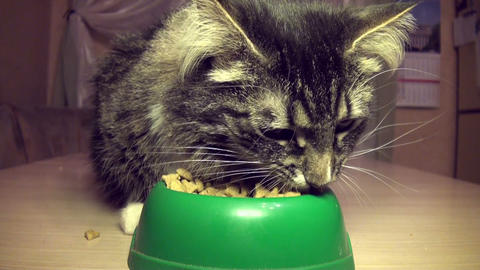 The cat eats a forage Stock Video Footage