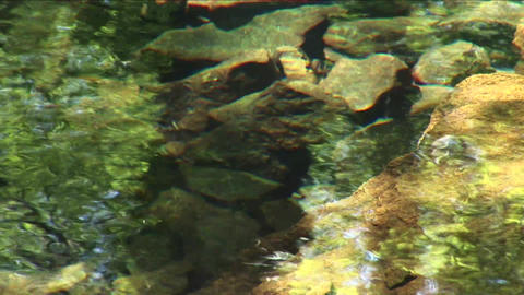 Ripples In The Pond With Reflection Footage