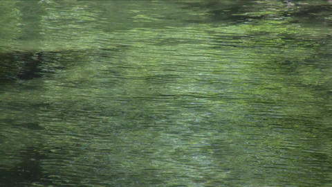 Ripples In The Pond Footage