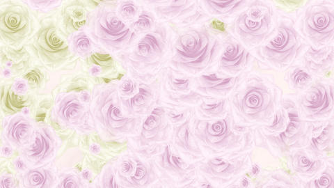 Pink and white rose buds fall down, soft loop bg Animation