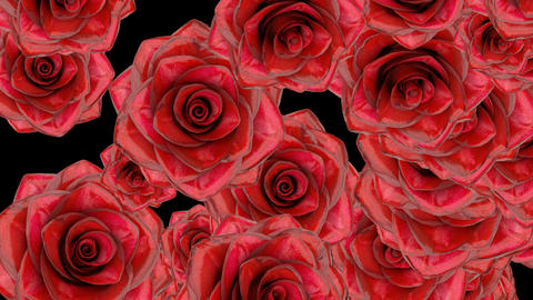 Red rose buds fall down on black bg ws alpha matte Animation