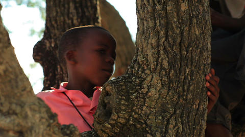 Little boy in a tree in Kenya Footage
