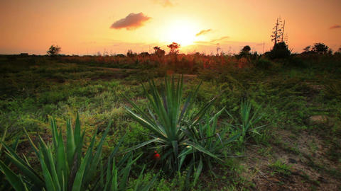 African landscape with cacti at sundown Live Action