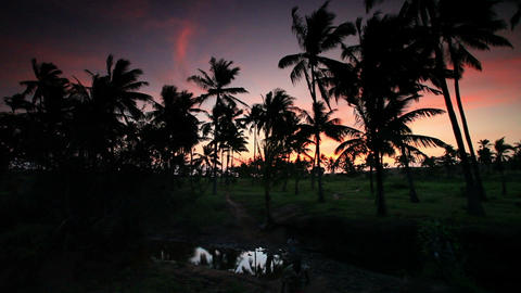 Palm trees at sunset near a village in Kenya Footage