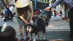 Shot of Asian women washing his dog in the street in Hanoi, Vietnam Archivo