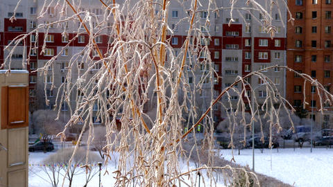 thin birch branches covered with hoarfrost in city Footage