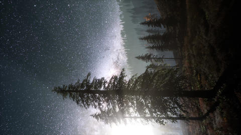Milky Way stars with moonlight above pine trees forest Footage