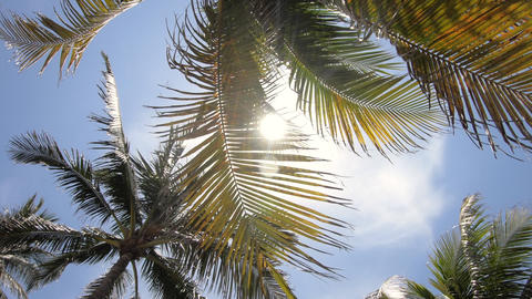 Palm Trees And Sun In South Beach Miami Florida USA Footage