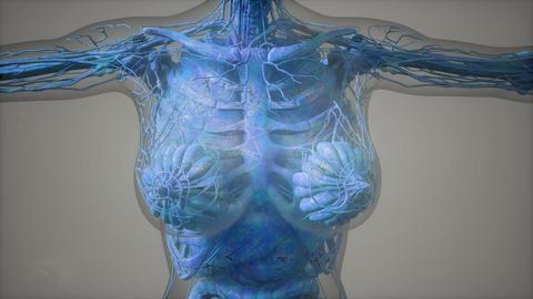 model showing anatomy of human body illustration Footage