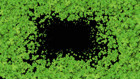 Beautiful Growing Clover Green Leaves Covering the Screen. Growing Grass Live Action