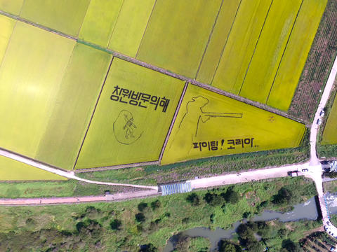 Aerial View of Cosmos Road and Rice Paddy Painting in Mujeom village, Changwon, フォト