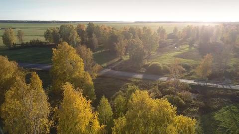 aerial view yellow birch grove in autumn sunlight haze Footage