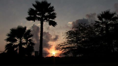 Palm tree silhouette at sunset Footage